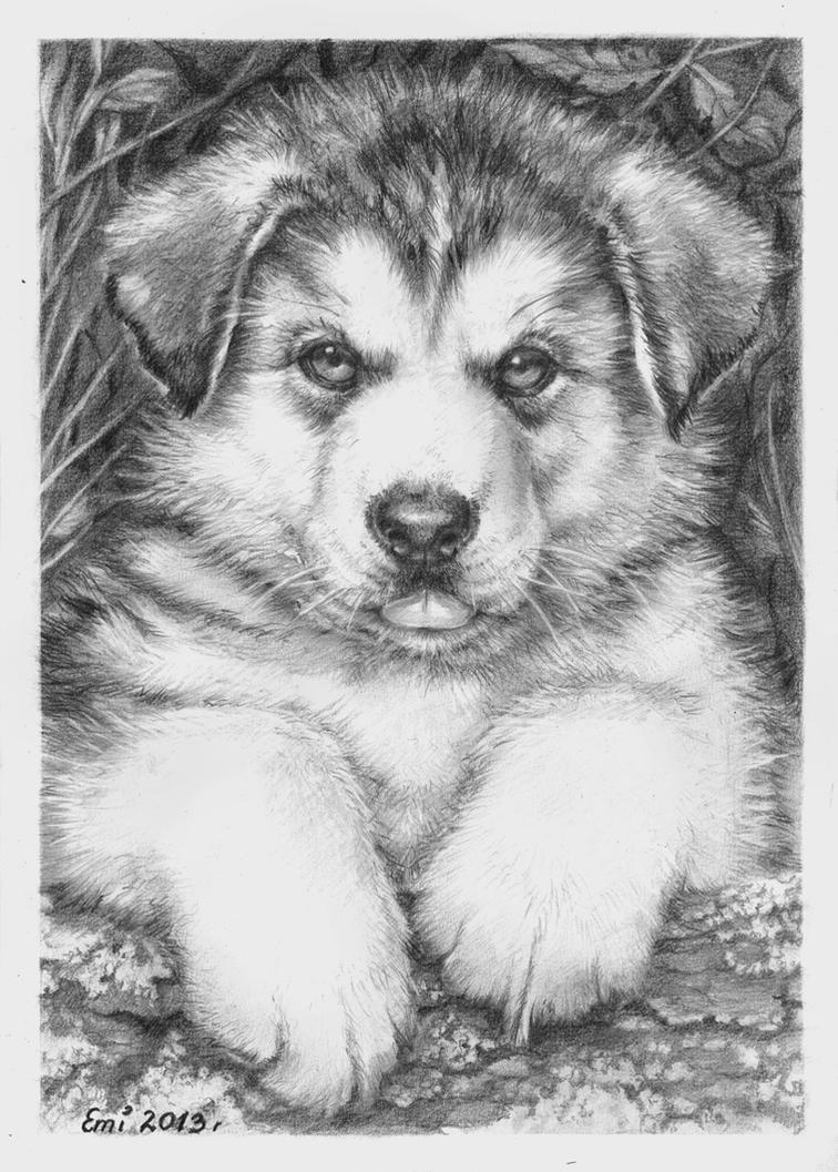 Husky puppy by Ninsianna on deviantARTCute Husky Puppy Drawings