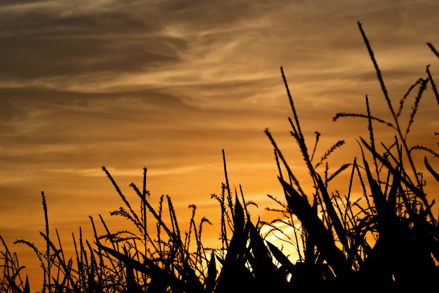 Last Rays of Summer by little--grasshopper