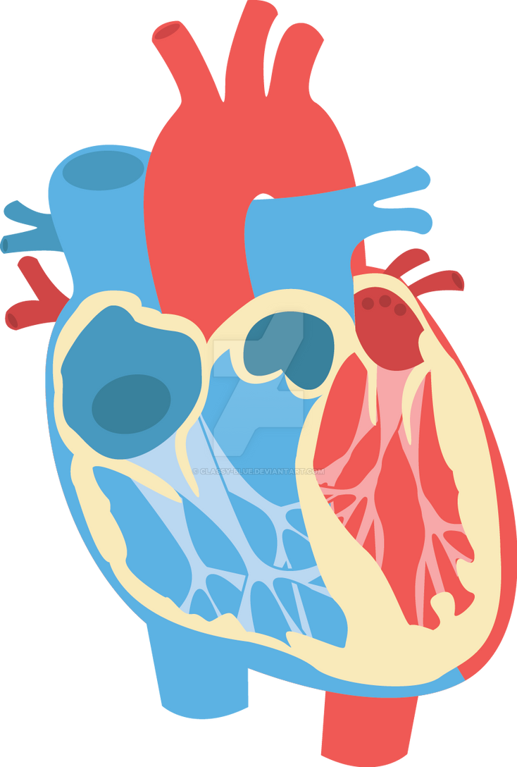 Human heart diagram by classy blue on deviantart human heart diagram by classy blue ccuart Choice Image