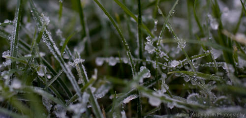 Frosty 6