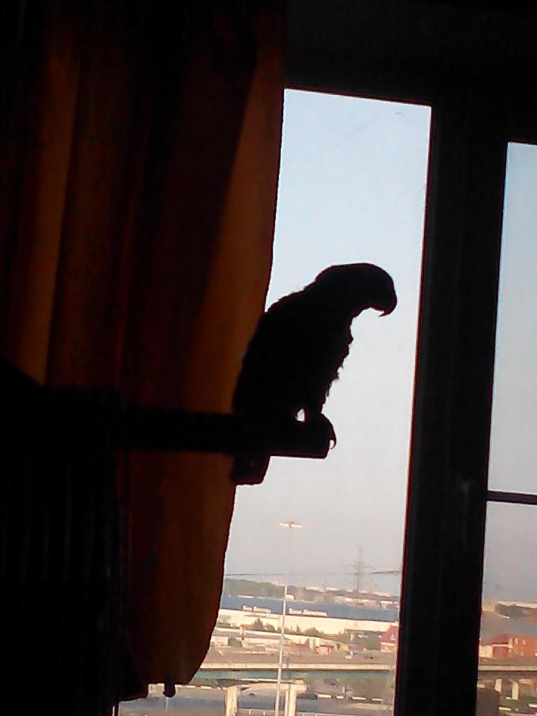 Moscow parrot by VeronikaDark