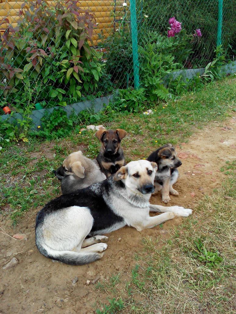 Mongrel puppies by VeronikaDark