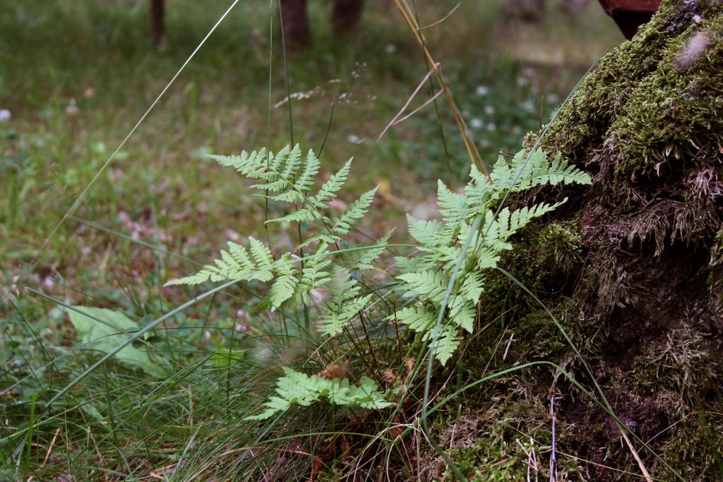 fern by GrayLynx