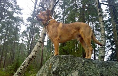 Forest Doge by naravox