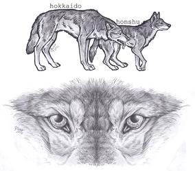 More wolfstuff