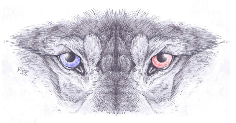 Eyes by naravox