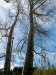 Una coppia di alberi by EiriniTs