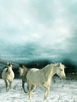 Horses in Winter by Capricuario