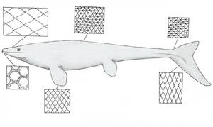 A Guide to Mosasaur Scales