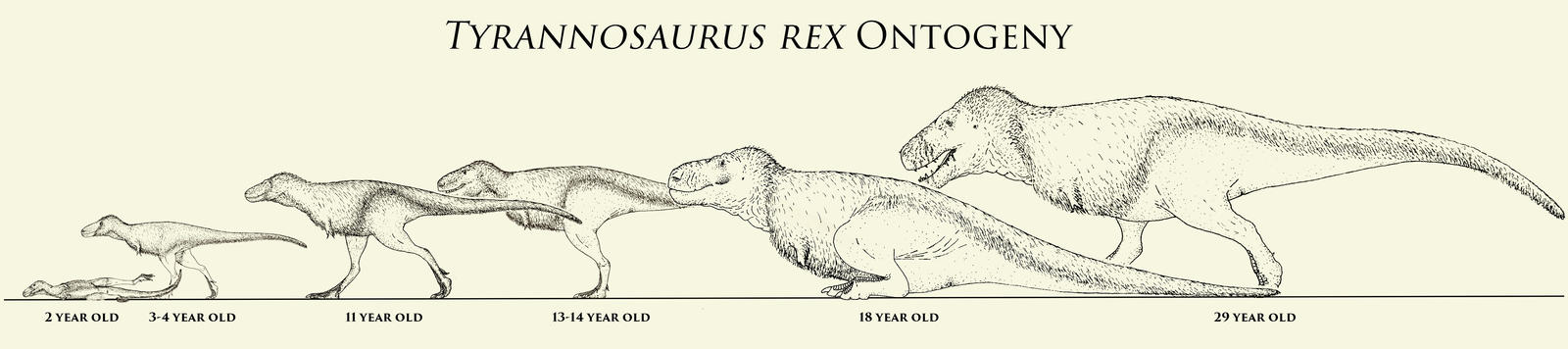T. rex Ontogeny