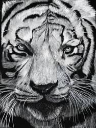 White Tiger by ILoveAnimeAndManga