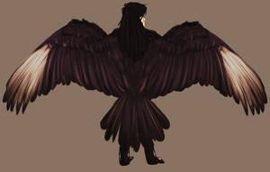 #303 Izumi's wings