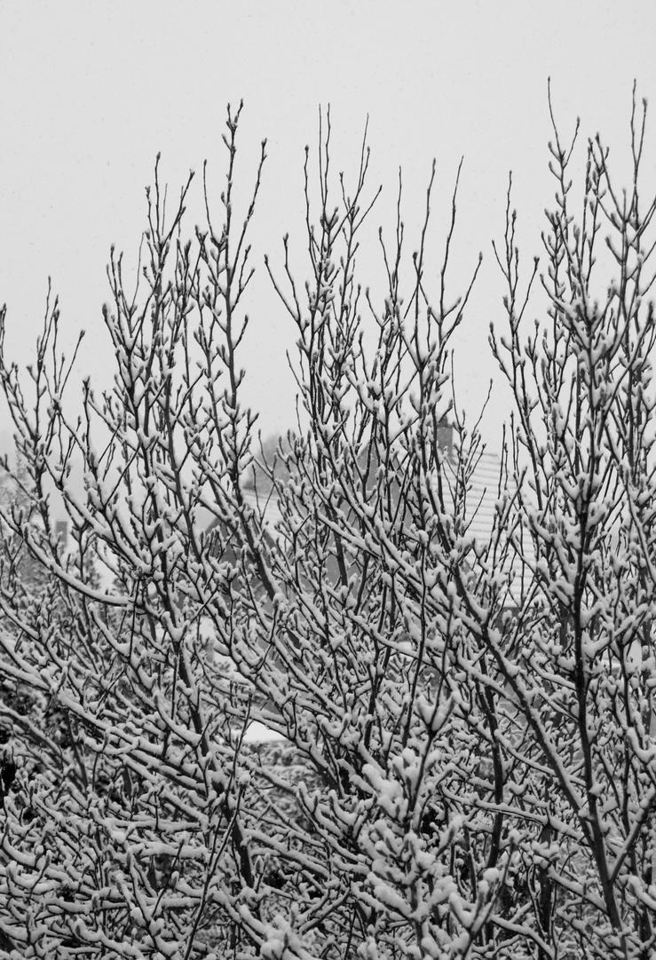 Winter 2 by kusoka
