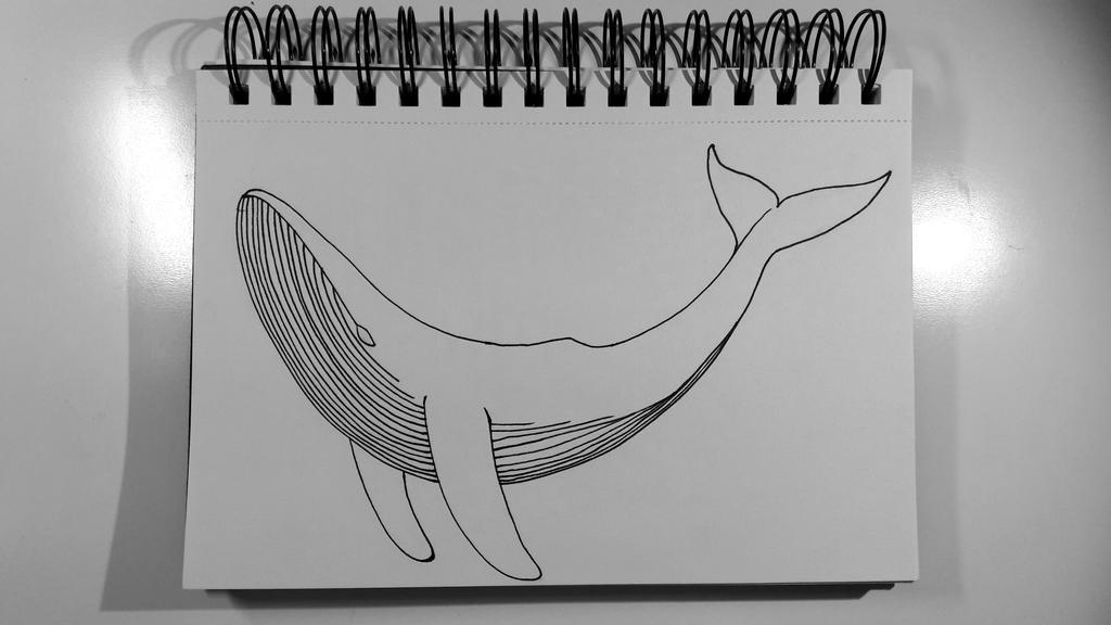 Whale by kusoka