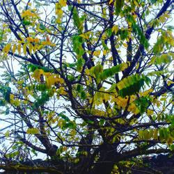 green winter by R1ckyFri3s