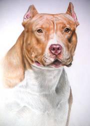 Dog pitbull by diogenesdantas