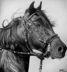Cavalo by diogenesdantas