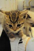 Kitty 2 by nahalila