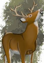 Whitetail Deer by BlacckWillow