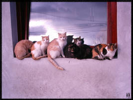 The cat party by iva-is-me