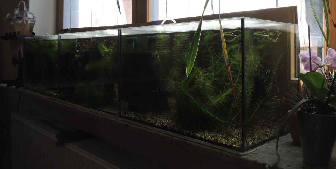 Aquarium II by LaGaDesk