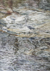 A Heron Therein