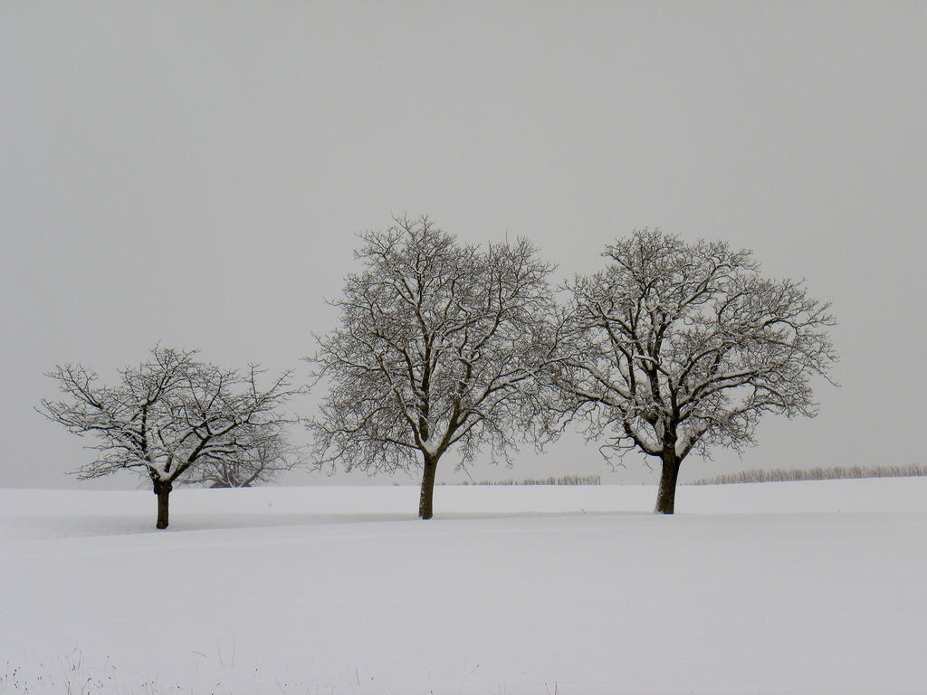 The Three Trees in Winter by artamusica