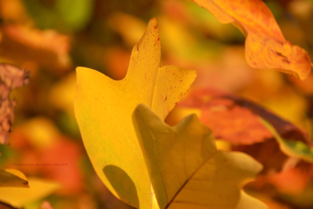 Autumn Emotion by artamusica
