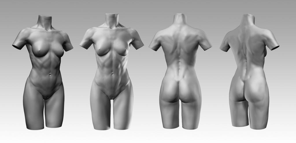 Female Torso -requesting critique (nudity) — polycount