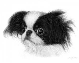 Japanese Chin - Cutie Pie Collection by Benjhons