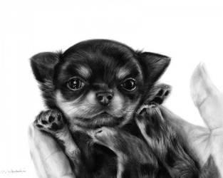 Chihuahua Puppy Turro by Benjhons