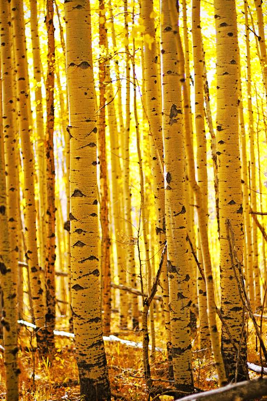 yellow by kikukaya