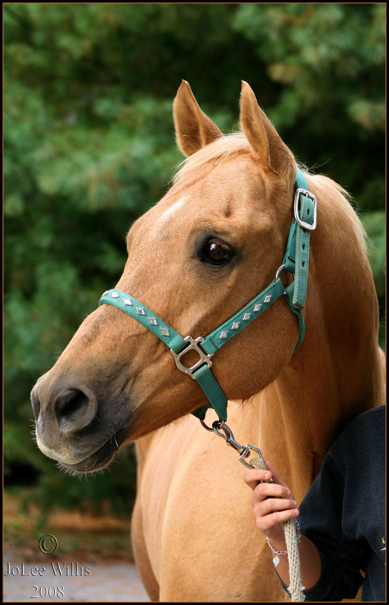 Diesel Portrait by Phantom303