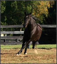 Gallop Sideways by Phantom303