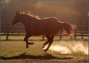 Sunset Gallop by Phantom303