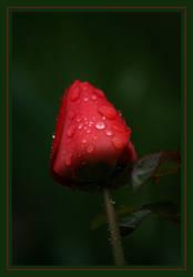 Crimson Droplets by Phantom303