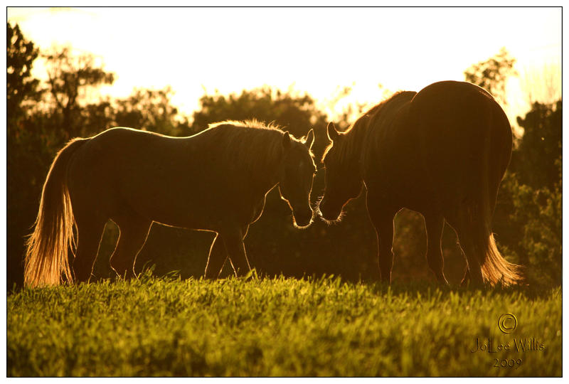 Sunset Meeting by Phantom303