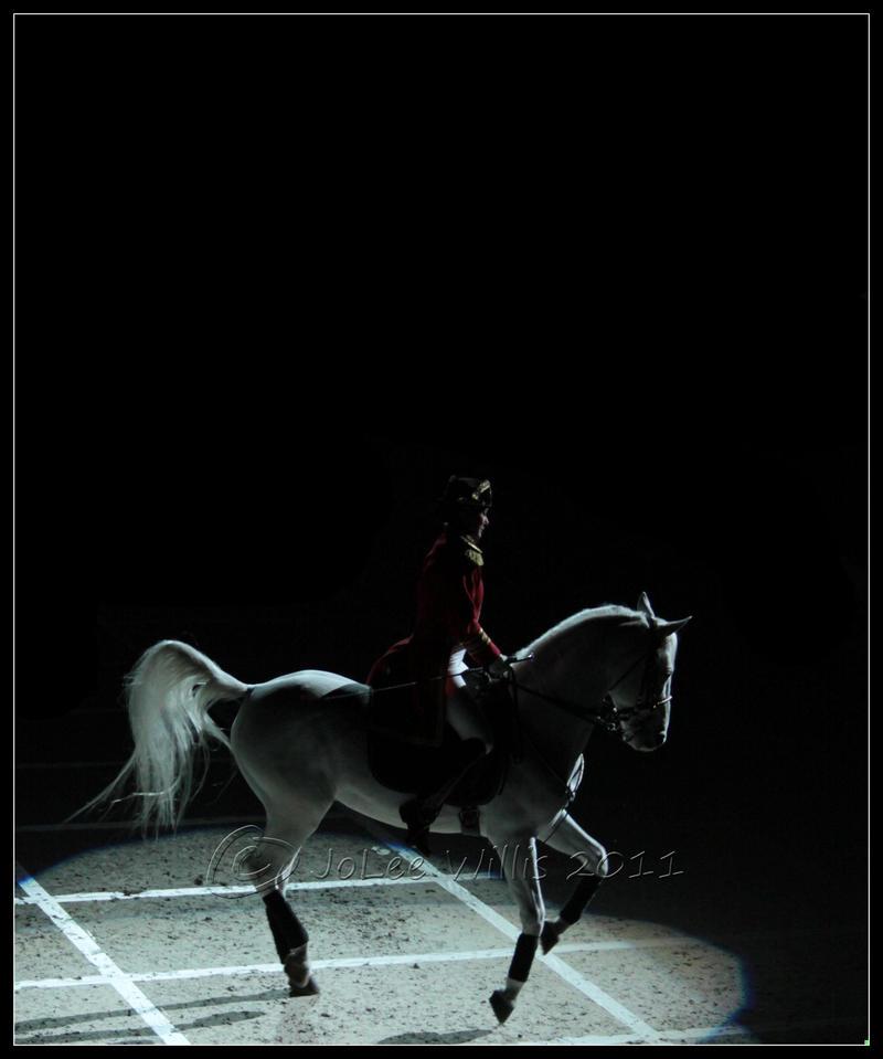 Lipizzaner Stallions 4 by Phantom303