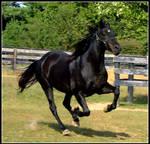 Spirit Gallop II