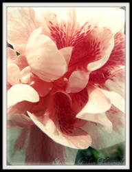 Flower : 6 by kristi-leegibson