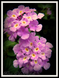 Flower : 7 by kristi-leegibson