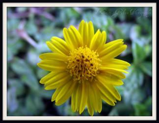 Flower : 8 by kristi-leegibson