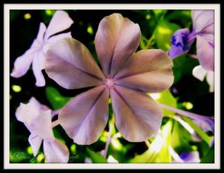 Flower : 9 by kristi-leegibson