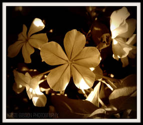 Flower : 10 by kristi-leegibson