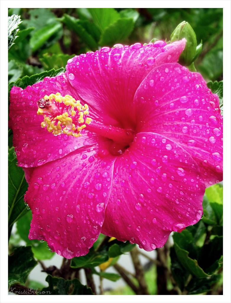 Raindrops by kristi-leegibson
