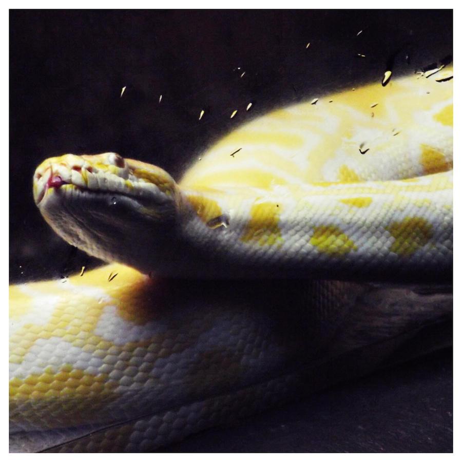 Snake by kristi-leegibson