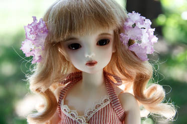 Caroline: Purple crape myrtles by roseofporcelain