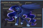 Anatomy of an Alicorn