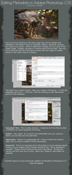Basic Metadata Tutorial for Photoshop CS 5 by tanikel