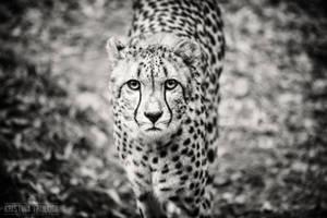 The Predator by tanikel